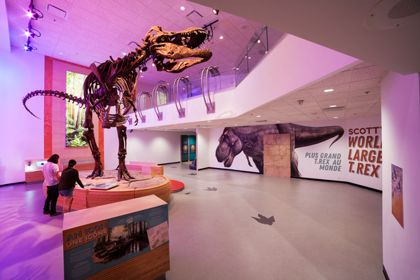 Scotty The World's Largest T-Rex